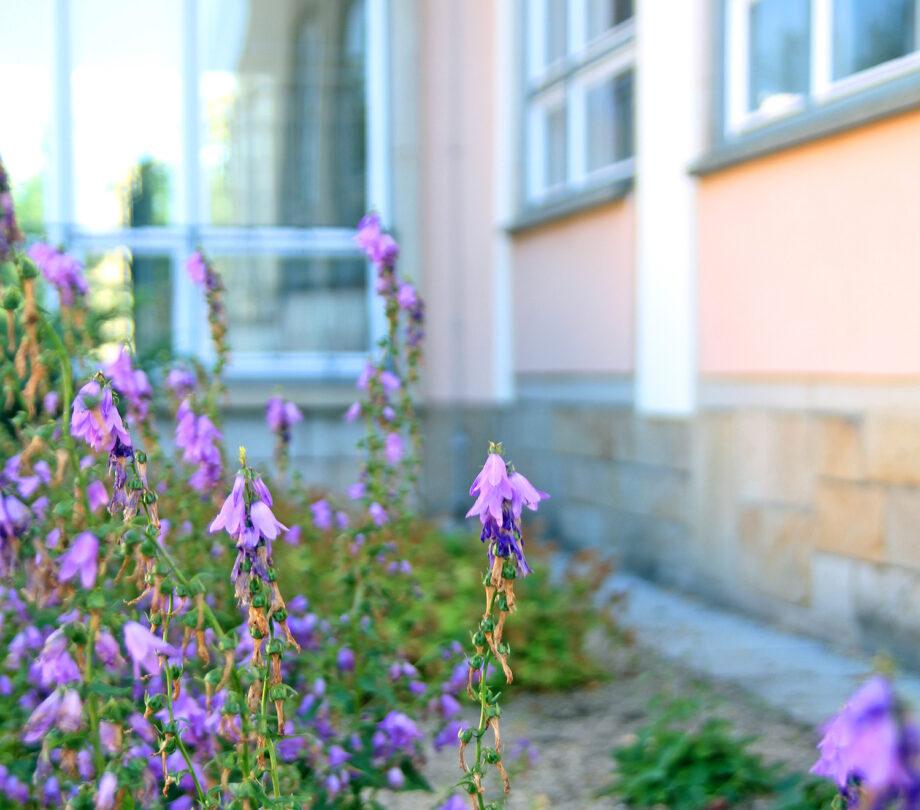 Bienenfreundliche Schule